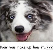 Smiling Dog